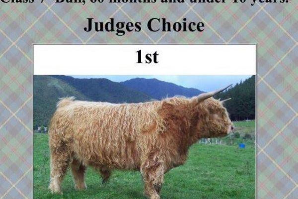 2017-virtual-highland-show-dunbar-of-laumonte-champion-senior-male-2nd-peoples-choice-showen-by-woolly-manor-moos36655233-1304-64D2-F8D6-A2F5CC135C8C.jpg